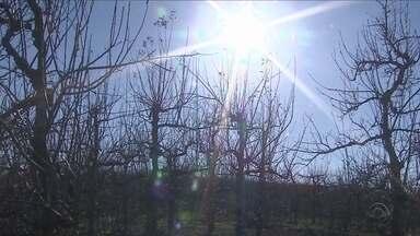 Produtores estão preocupados com a produção de maçã em SC - Produtores estão preocupados com a produção de maçã em SC