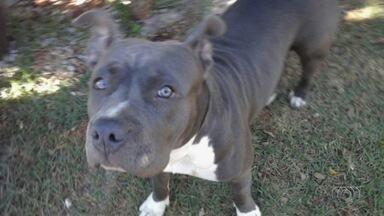 Furtos e roubos de cachorros aumenta em Goiânia - Donos contam histórias de sofrimento após perder o cãozinho para o crime.