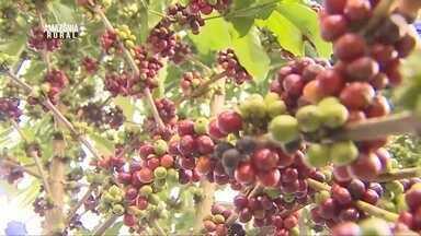 Parte 2: Estado de Rondônia se destaca com a produção de café - Atividade impulsiona economia e colheita deve chegar a um milhão e meio de sacas.