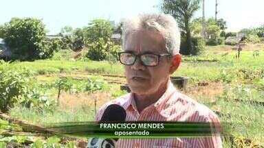 Hortas comunitárias geram emprego e renda na zona urbana de Teresina - Hortas comunitárias geram emprego e renda na zona urbana de Teresina