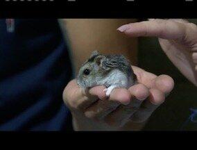 Saiba a melhor forma de cuidar do seu hamster - A alimentação desses pets deve ser balanceada.