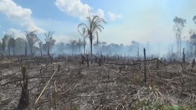 Fogo atinge terrenos em Nova Olinda do Norte, no AM - Autoridades alertam para riscos de incêndios em área urbana.