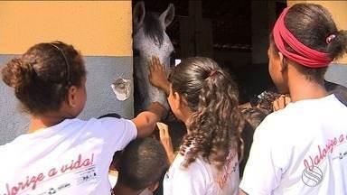 Crianças interagem com animais da cavalaria da Polícia Militar - Crianças interagem com animais da cavalaria da Polícia Militar.