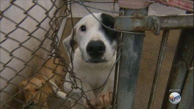 Centro de Controle de Zoonoses de Americana tem 170 animais para adoção; veja como adotar - Interessados devem levar RG, CPF e comprovante de endereço.