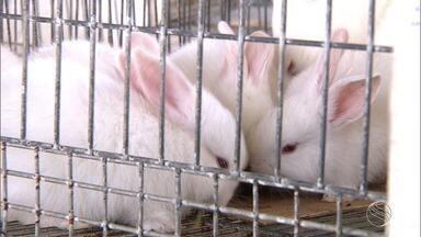 Saiba como funciona a criação dos coelhos - Saiba como funciona a criação dos coelhos.