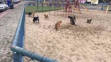 VC no ESTV: parceiro flagra cachorros tomando conta da pracinha Feu Rosa, na Serra - O parceiro registrou 9 cachorros na pracinha e nenhuma criança.