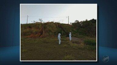 Vinte pessoas ficam feridas após ataque de abelhas em São Sebastião do Paraíso - Vinte pessoas ficam feridas após ataque de abelhas em São Sebastião do Paraíso