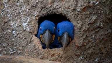 Aberta a temporada de namoro no Zoológico - Com a proximidade da primavera, os animais estão em plena época de acasalamento.