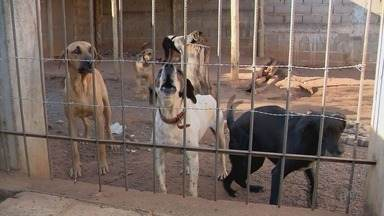 Ataque de cães a pessoas é tema de audiência pública em Alfenas (MG) - Ataque de cães a pessoas é tema de audiência pública em Alfenas (MG)