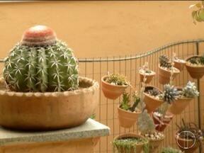 Colecionadores do leste de Minas cultivam cactos e suculentas - Essas espécies de plantas são ideais para o clima seco e quente.