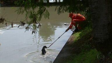 Bombeiros resgatam cachorro que caiu no canal da Agamenon, no centro do Recife - Animal estava assustado, sem conseguir sair de vala