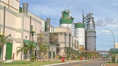 Produtores de eucalipto ficam otimistas com a venda da Eldorado Brasil Celulose em MS - A venda da indústria para um grupo estrangeiro deve estimular novos negócios na cidade.