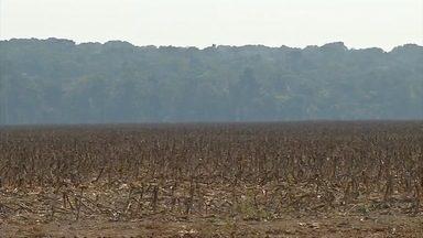 Plantio da soja se aproxima - A poucos dias do sinal verde para a nova safra, agricultores ajustam os preparativos para o plantio.