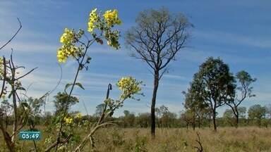 Pesquisador fala sobre importância da preservação do cerrado - Esta segunda-feira (11) é o Dia Nacional do Cerrado. Professor e pesquisador da Universidade Federal de Mato Grosso do Sul, Geraldo Alves Damasceno Júnior, comenta.