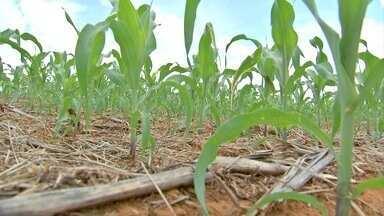 Estudo mostra os efeitos positivos da adubação sistêmica do solo - Estudo mostra os efeitos positivos da adubação sistêmica do solo.