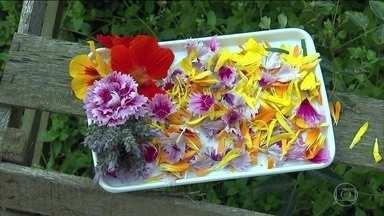 Flores podem servir como alimento; conheça algumas espécies - Em Tatuí, no interior de São Paulo, uma fazenda é especializada em flores comestíveis. Muitas espécies vendidas em floricultura podem se tornar comestíveis caso sejam produzidas de forma natural.