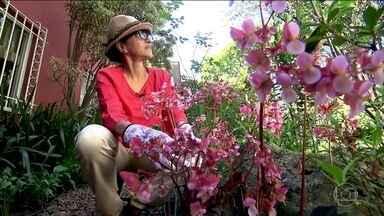 Jardinagem ajuda moradora de SP a combater a depressão - Creusa fez tratamento para a depressão pós-parto com remédios. Mas encontrou bem-estar no jardim de casa, onde já cuidava de orquídeas. Atualmente, ela trabalha tratando e vendendo mudas.