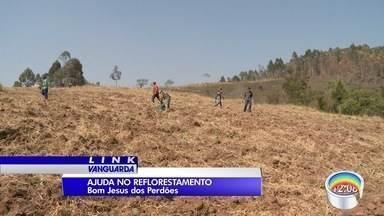 Alunos vão plantar mil mudas em área que será reflorestada em Bom Jesus do Perdões - Área queimada equivale a mais de 300 campos de futebol.