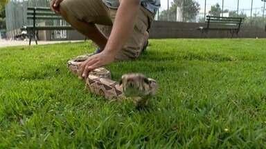 Em Movimento: Animais exóticos chamam atenção em pracinha de Jardim da Penha - Criadores levam seus bichos para passear