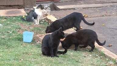 Centenas de cães e gatos estão à espera de adoção em Belo Horizonte - ONGs de defesa aos animais estimam que há cerca de 35 mil bichos abandonadas na capital.