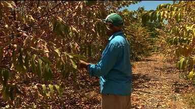 Estiagem prolongada prejudica produtores rurais da região - O rio está bem seco, o que prejudica os trabalhadores que dependem da irrigação.