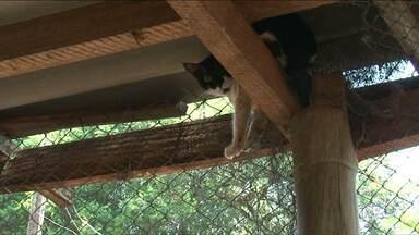 Abelhas atacam cães e gatos de ONG em Paranavaí - Vários gatos foram picados, mas todos passam bem, segundo a Sociedade Protetora dos Animais de Paranavaí.