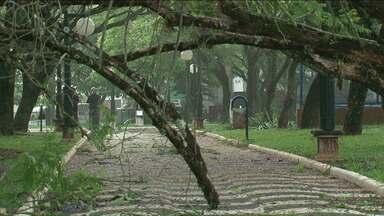Depois do temporal prefeitura faz a limpeza para retirar árvores que caíram - A prefeitura continua o trabalho de limpeza na cidade, ainda há árvores e galho caídos pela cidade.
