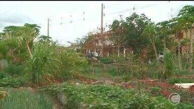 Bandidos roubam verduras e horticultores do Dirceu reclamam da falta de segurança - Bandidos roubam legumes e verduras e horticultores do Dirceu reclamam da falta de segurança