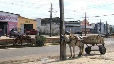 Situação das carroças em Aracaju foi discutida na OAB/SE - Situação das carroças em Aracaju foi discutida na OAB/SE.