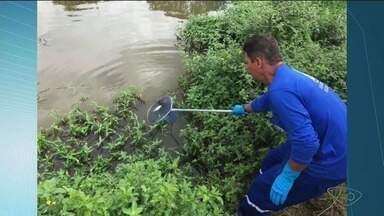Limpeza no Rio Castelo, no Sul do ES, é finalizada por empresa - Empresa derramou produto químico no rio.