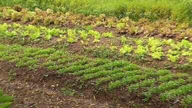 Horta comunitária muda realidade de agricultores de Socorro - Local fica no Povoado Quissamã.
