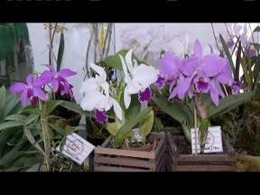 28º Exposição de Orquídeas é realizada em Governador Valadares - Serão mais de quatro mil orquídeas expostas; a entrada é gratuito e o evento será na Galeria Monhangara.