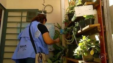 Marília aumenta fiscalização contra criadouros do mosquito da dengue - Levantamento feito em Marília mostrou que 40% das casas vistoriadas pela prefeitura tinham água parada nos ralos e em vasos de plantas. Em época de chuva, o perigo de uma epidemia de dengue aumenta.