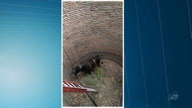 Bombeiros resgatam vaca que caiu em cacimba no interior do Ceará - Confira mais notícias em G1.Globo.com/CE