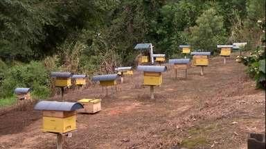 Saiba como alimentar as abelhas durante o inverno - Quando há pouco oferta de comida, por conta da escassez de flores, é preciso reforçar a dieta das abelhas. Hoje em dia existem muitas opções de alimentos prontos para oferecer.