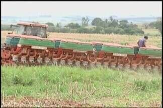 Produtores do Alto Paranaía aproveitam chuvas para o plantio de feijão - Minas Gerais é o terceiro maior produtor do grão em primeira safra. Produção aumentou 1,4% em relação ao ano passado.