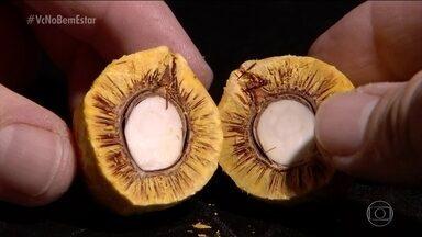 Pequi é um fruto típico do cerrado que ganha cada vez mais admiradores - É preciso ter cuidado ao comer. O Bem Estar conta o segredo do pequi.
