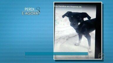 Achados e perdidos: cachorros perdidos e cartão encontrado - Achados e perdidos: cachorros perdidos e cartão encontrado.
