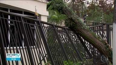 Árvore parte ao meio e atinge portão de prédio residencial na Zona Sul - Rua Moliére, no Jardim Marajoara, está interditada e sem energia para que as equipes possam trabalhar na retirada da árvore.