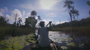 Série Tapajós mostra como comunidades no Pará vivem com a natureza - Equipe da EPTV foi a Suruacá e conheceu um povo alegre que sabe como aproveitar o que o meio ambiente oferece.