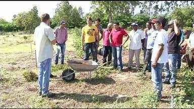 Técnicas sustentáveis ajudam a diminuir custos de produção em pequenas lavouras - Técnicas sustentáveis ajudam a diminuir custos de produção em pequenas lavouras