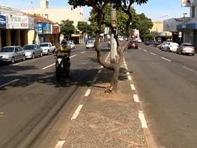 Prefeitura realiza poda de árvores na Avenida Manoel Goulart - Mulher morreu em um trecho da via na última semana.