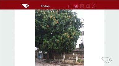 Moradora pede poda de árvore em Cachoeiro, no Sul do ES - Galhos estão atingindo fios de energia.