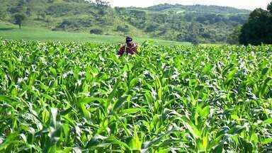 Produção de milho deve reduzir em até 40% em Uberaba - Redução na área plantada está prevista para ocorrer em todo o país.