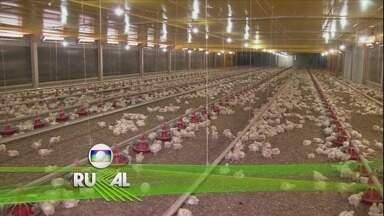 Globo Rural - Edição de 17/12/2017 - Pesquisadores da Embrapa desenvolvem sistema de produção do ora-pro-nóbis. Pera, maçã e caqui se adaptam às altas temperaturas no sertão de Pernambuco. E outras notícias do campo.
