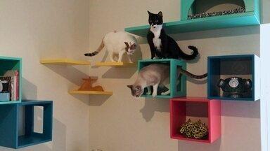 Empresária cria peças para decorar a casa e oferecer conforto aos gatos - Entre os 12 modelos de móveis há arranhadores, casinhas e mesas que ficam bonitas em qualquer casa e ainda deixam os pets felizes.