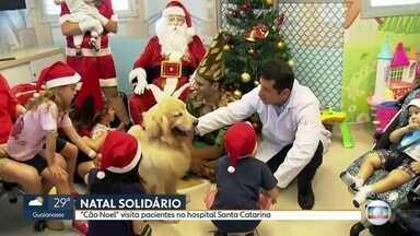 'Cão Noel' visita pacientes de hospital infantil - Quatro mil famílias recebem doações da Legião da Boa Vontade.