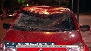 Árvore cai sobre dois carros na pista expressa da Marginal Tietê - Sete pessoas de uma mesma família estavam nos veículos, mas ninguém se machucou. Mas nenhum dos carros tinham seguro.