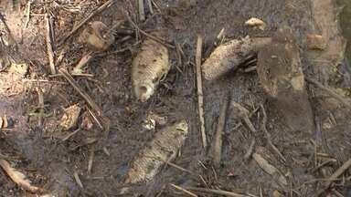 Equipes do Ibram e da Adasa buscam causa da da morte de peixes no Gama - Equipes do Ibram e da Adasa buscam causa da da morte de peixes no Gama.