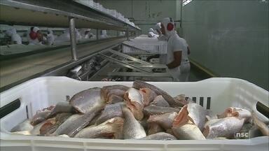Ministério da Agricultura suspende exportação de pescado para União Europeia - Ministério da Agricultura suspende exportação de pescado para União Europeia